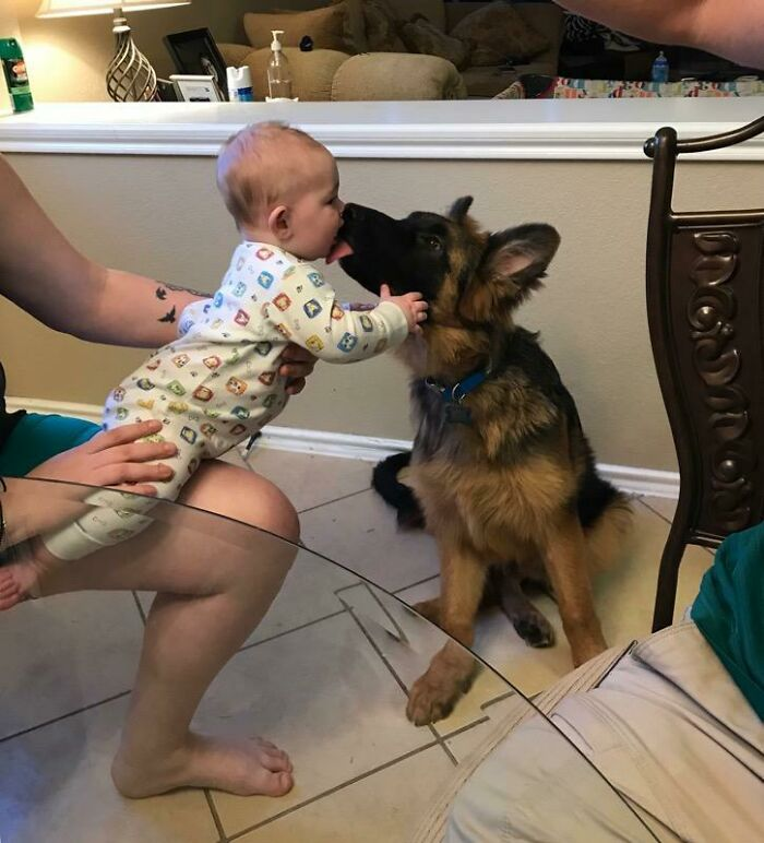 My Nephew Meeting The Puppy