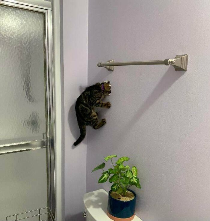 Me preguntaba dónde se había metido nuestro nuevo gatito…