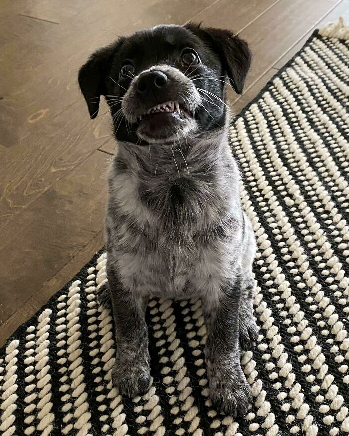 Meet Harlow! Adopted Yesterday And Already Working On Her Smile, It's A Struggle Sometimes