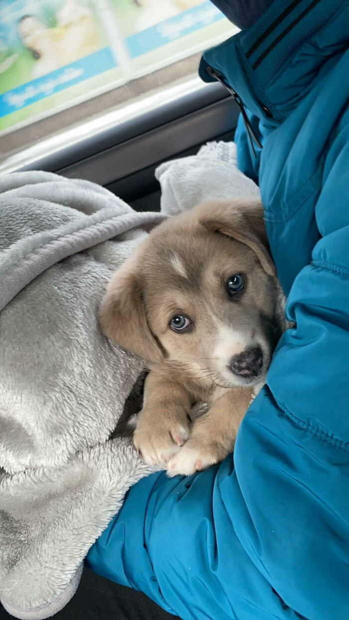 Rescued Her From Snow