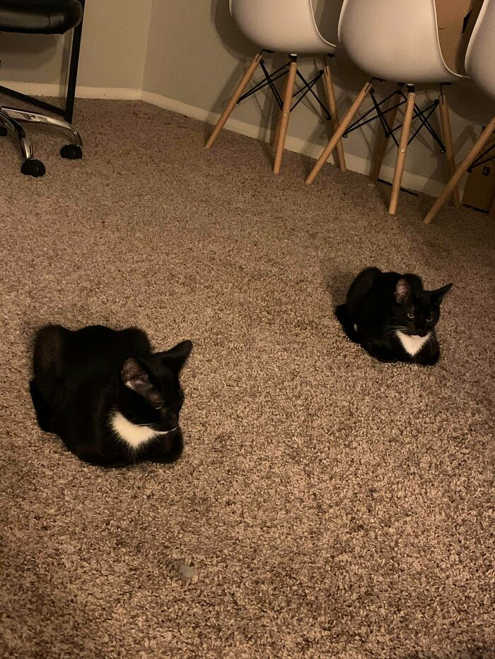 Tried To Adopt One Loaf, Ended Up With Twin Loaves
