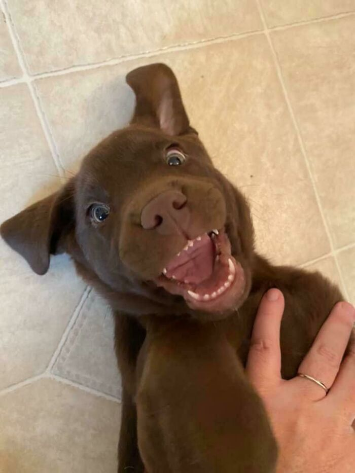 My Friends Adopted A New Puppy. Don't Let The Poker Face Fool You; He's Overjoyed