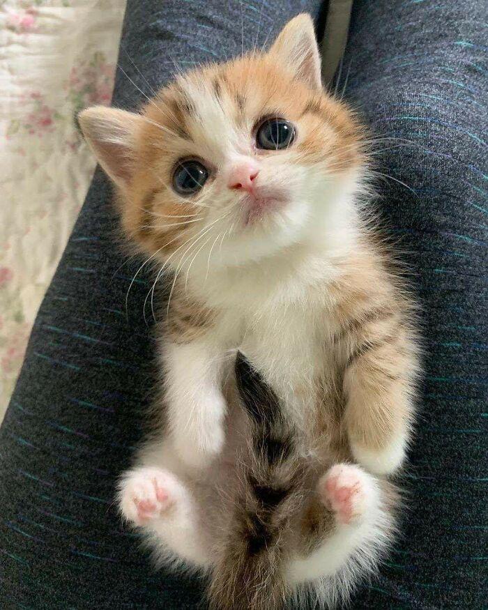 Pequeño gato en general por ser irrazonablemente lindo. Si lo ven, informen a las autoridades locales de inmediato