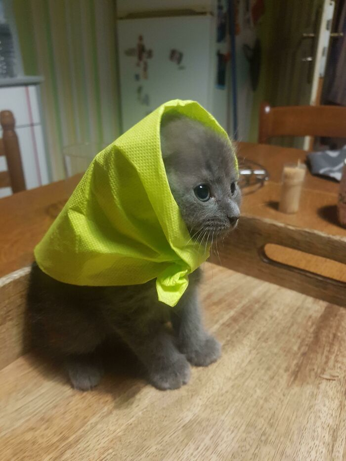 Mi madre hizo un sombrero con un pañuelo de papel para un pequeño gatito
