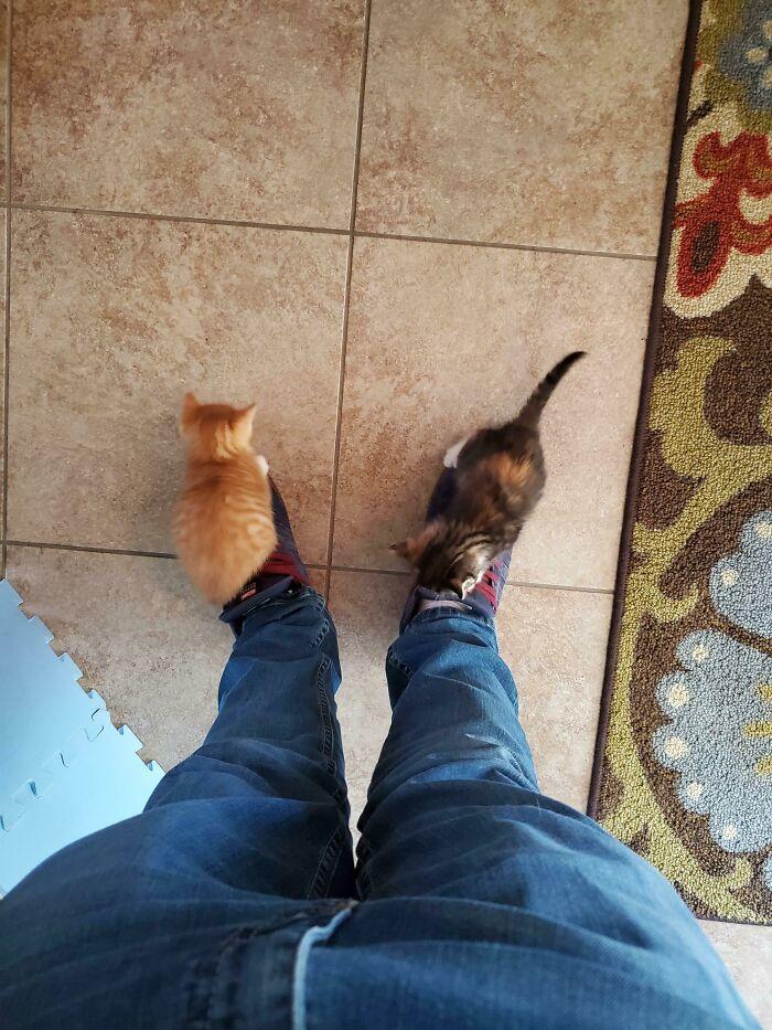 Estos dos pequeños delicuentes que mi amigo acaba de adoptar