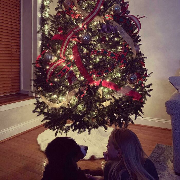 My Girlfriend Decorated Our Tree With My Dog Last Week