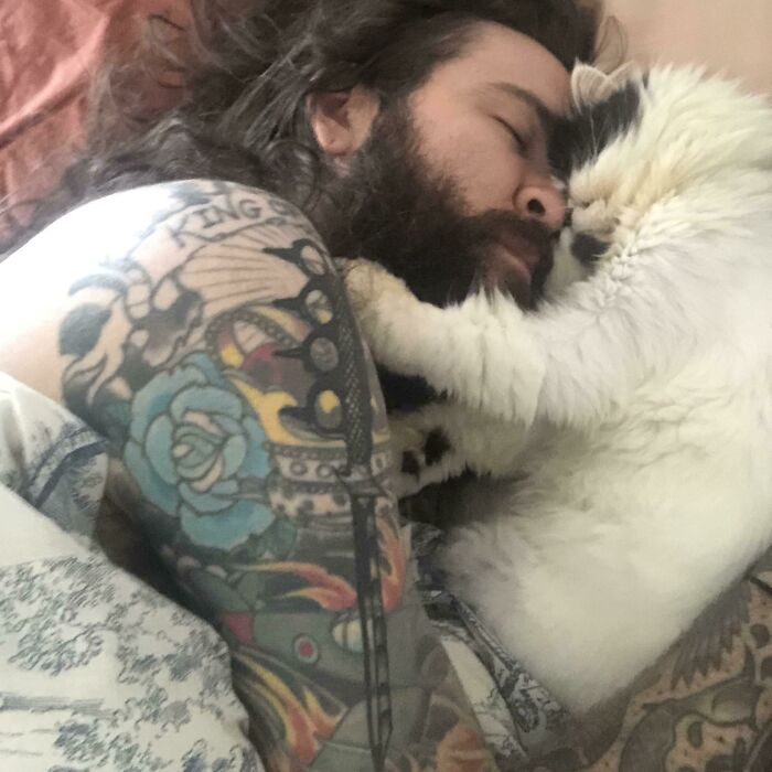 My Girlfriends Cat Has Decided He Is Obsessed With Me And Now We Wake Up Like This Every Morning