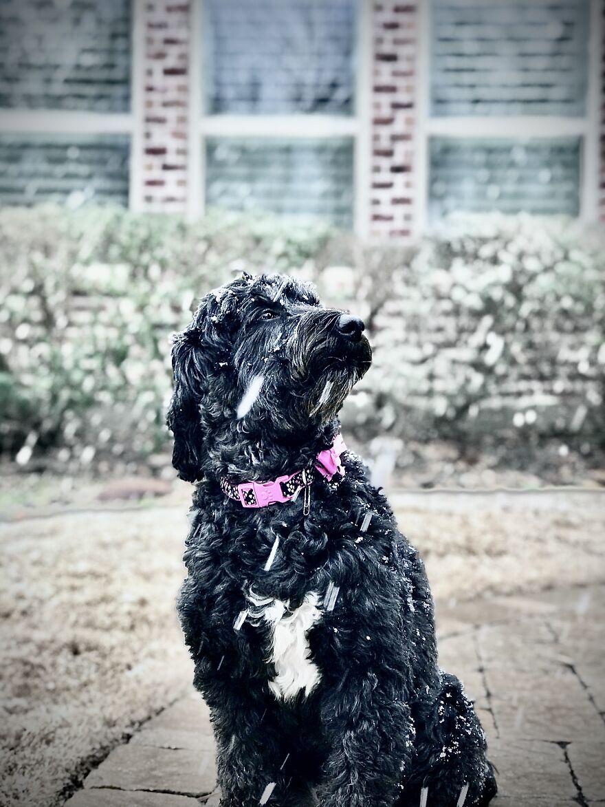 My Dog Had A Mini Photoshoot In The Rare Texas Snow: