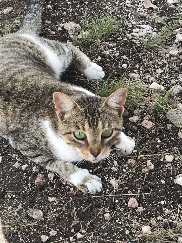 This Samantha, She Was A Barn Cat. Sadly She Ran Away For Unknown Reasons