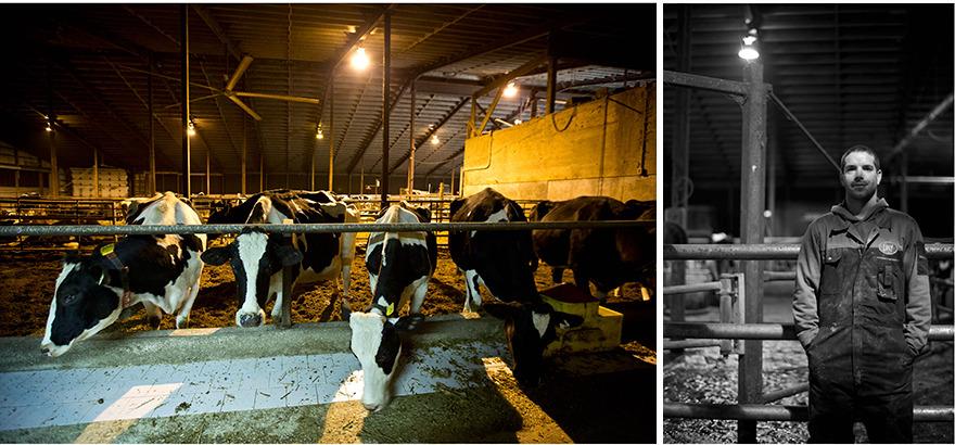 Dan, Dairy Farmer, Cressridge Farms