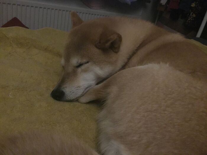 Sleeping Next To Me Like She Does Every Night