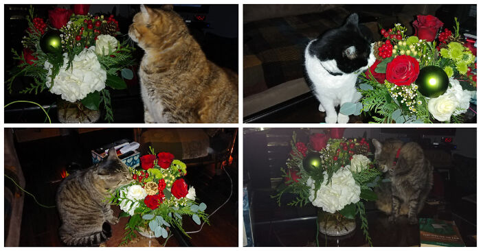 Flowers Sent By My Brother.. Approved By My Cats.