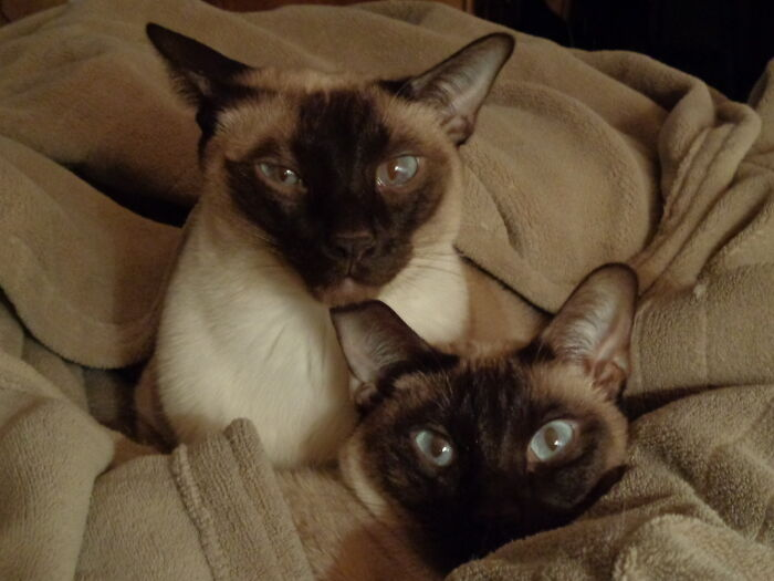 Hibernating For The Winter. They Love Electric Blankets.
