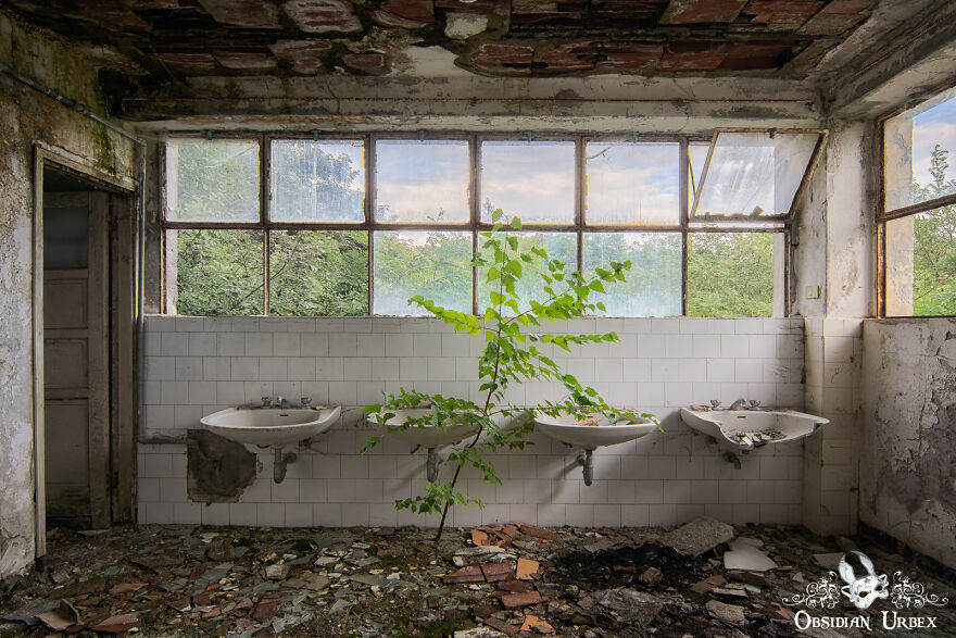 A Sapling Grows In The Bathroom Of An Old Sanatorium In The Italian Mountains