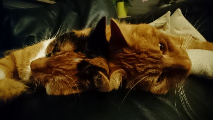 Brother And Sister Love..