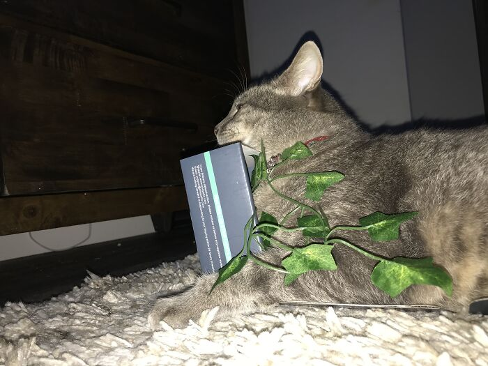 Trying To Fit His Fat But Into A Small Box