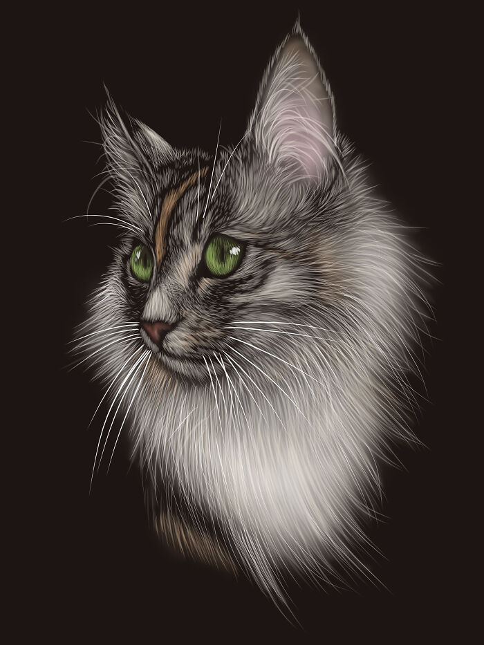 Tilly The Norwegian Forest Cat