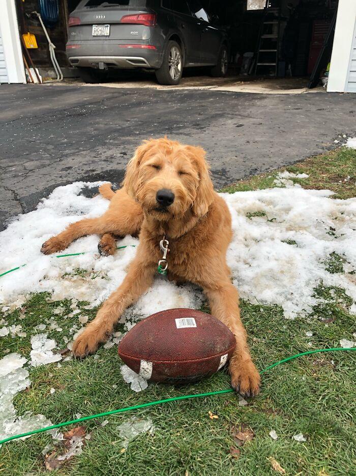 Nala Loves Her Football