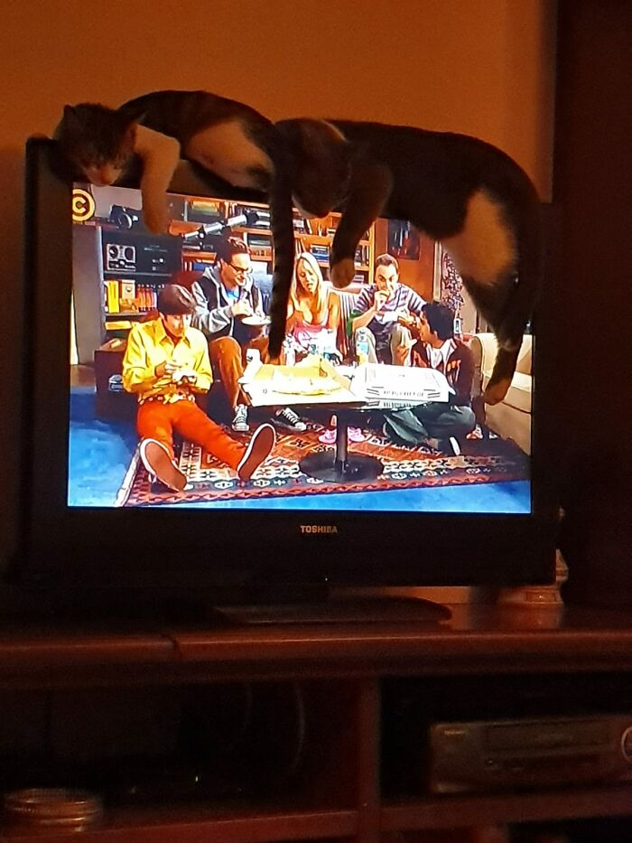Pinky And British Napping On TV