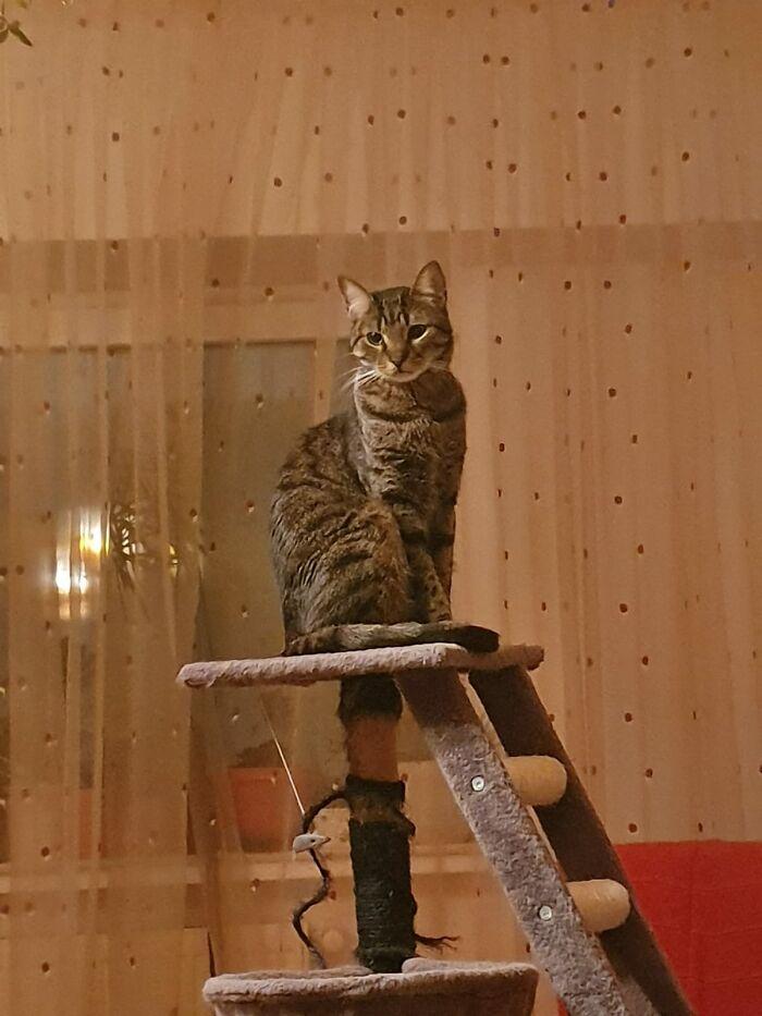 Majestic Cat Asclepio
