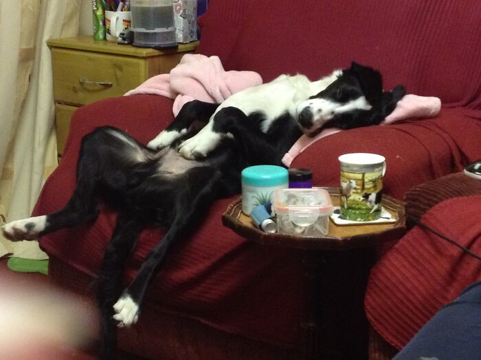 This Is How Shilo Slept When He Was Younger. He Thankfully Sleeps In A More Dignified Position Now.
