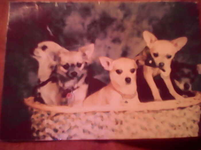 L To R: Buster, Lil' Miss, Fawn, Paris And Missy. All Have Crossed The Rainbow Bridge Now. 💔