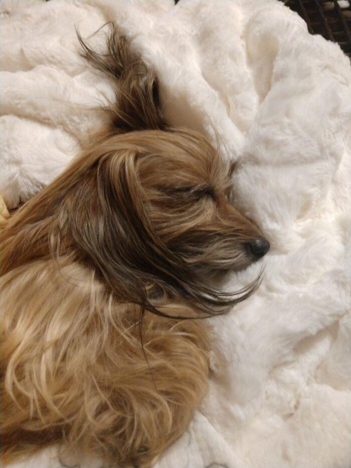 Getting Some Beauty Sleep