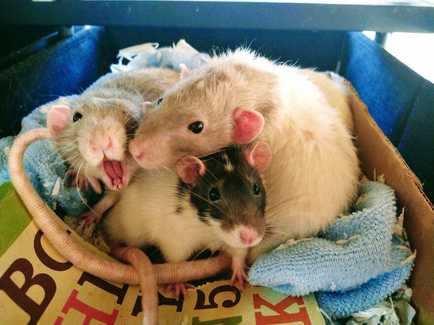 Snuggle Pile!