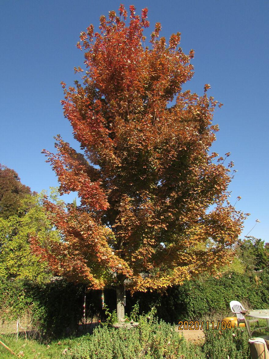 A Tree Changing... Like The World Around Us