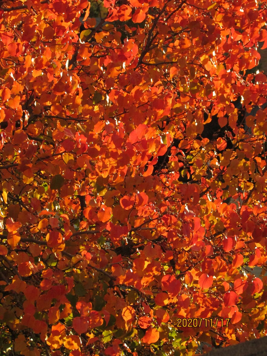 Orange Like Fall Leaves- Oh Wait, They Are Fall Leaves