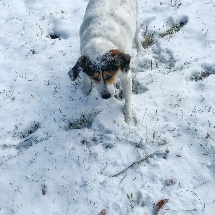 Doing Whatever Fat Snowdogs Do (Meet Zoey Aka Fatniss Everdeen)