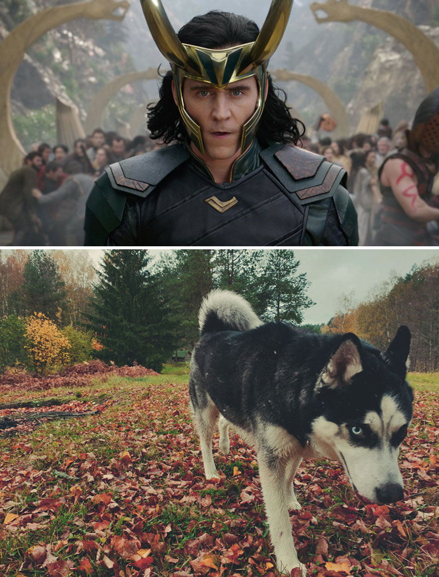 Loki - The God And Dog Of Mischief