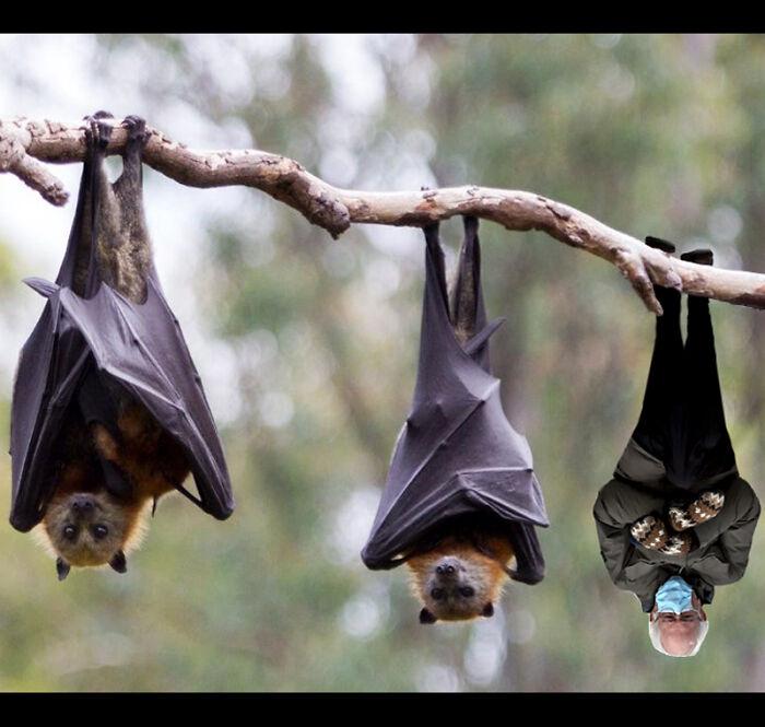 Bat Sanders