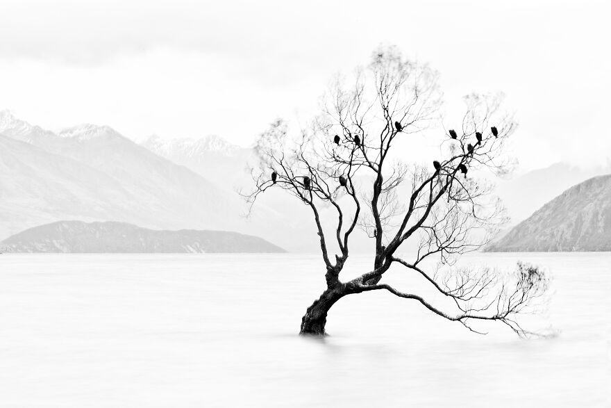 Lone Tree, Not Lonely