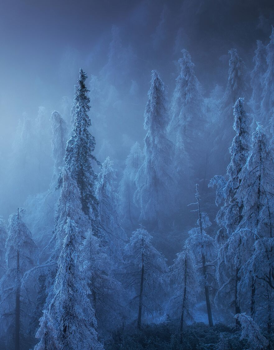 The Depths Of Winter Forest