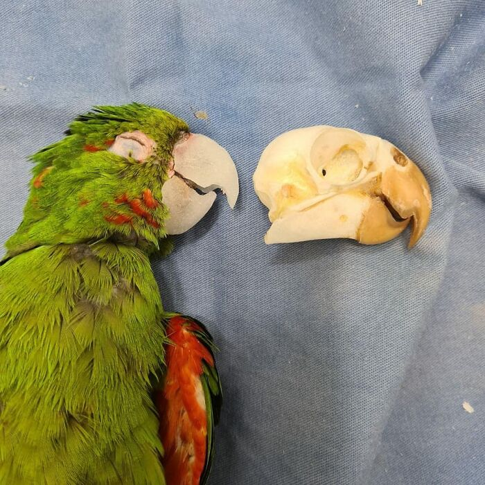 Parrot Gets A Brand New Beak After Being Rescued In A Horrible Condition