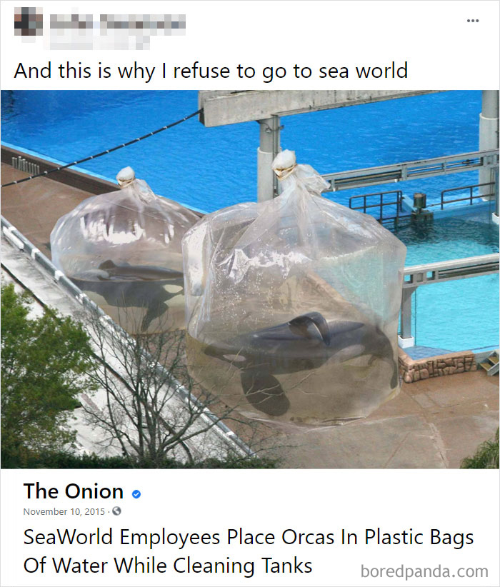One Of The Many Reasons To Hate Sea World