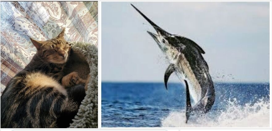 Marlin, See The Resemblance?