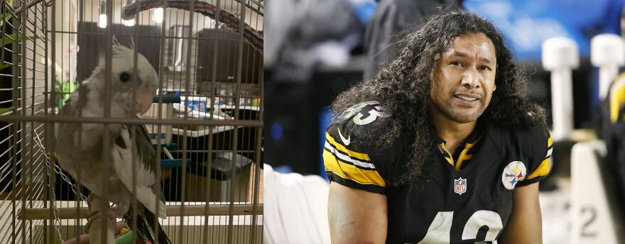 Troy After Troy Polamalu... They Both Have Awesome Hair!