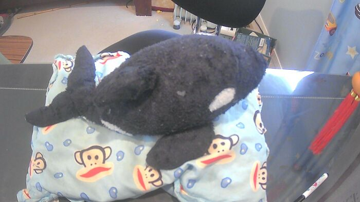My Small Orca And Pillow. Had Them Since I Was 2 And Still Love Them