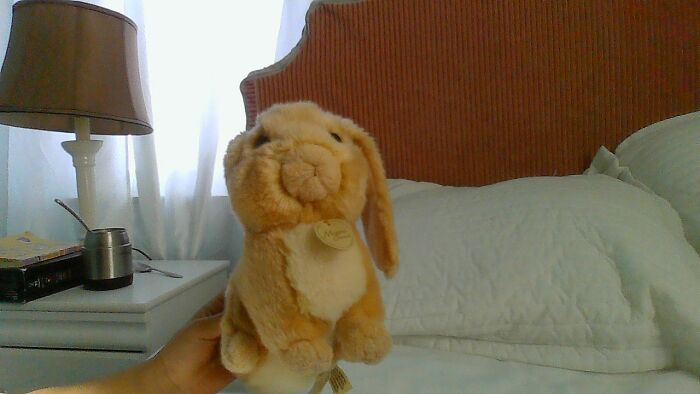 I Have Had Bunny For 8 Years Witch Is My Entire Life :}