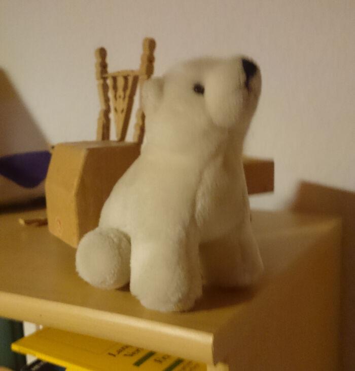 My Polar Bear Rescued From The Crawl Crane 30 Years Ago!