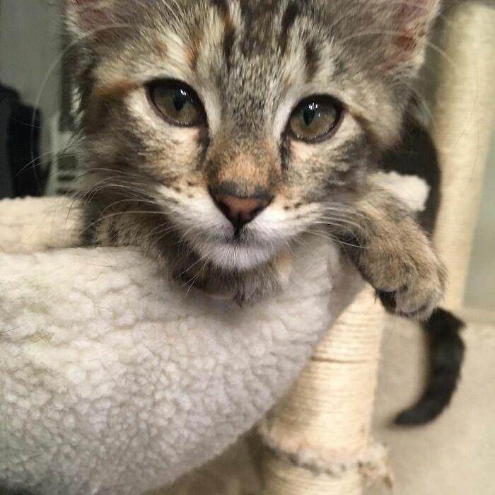 Dottie (My Soulcat)