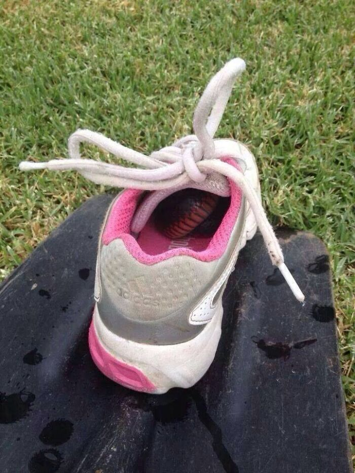 In Australia, This Is Why We Check Our Shoes