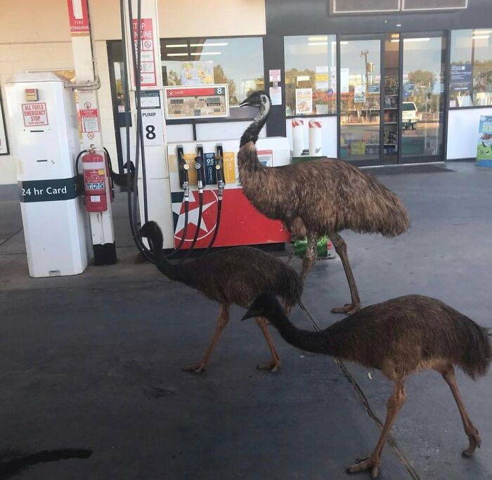 They Did Not Find The $1.47 A Litre Emusing