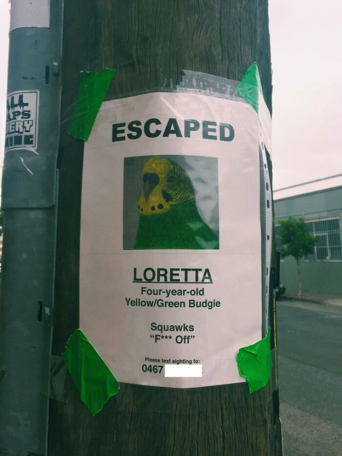 Don't Expect Thanks From Loretta If You Find Her