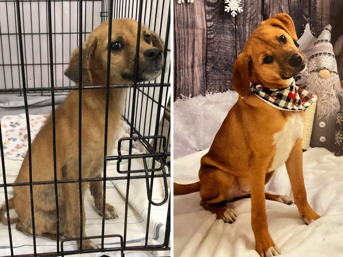 Ivy Grimm pasó de ser una perra callejera enferma a una mimada y sana de 9 meses