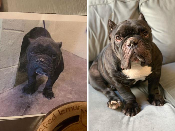 Piggie en el refugio y Piggie en su sofá después de la adopción