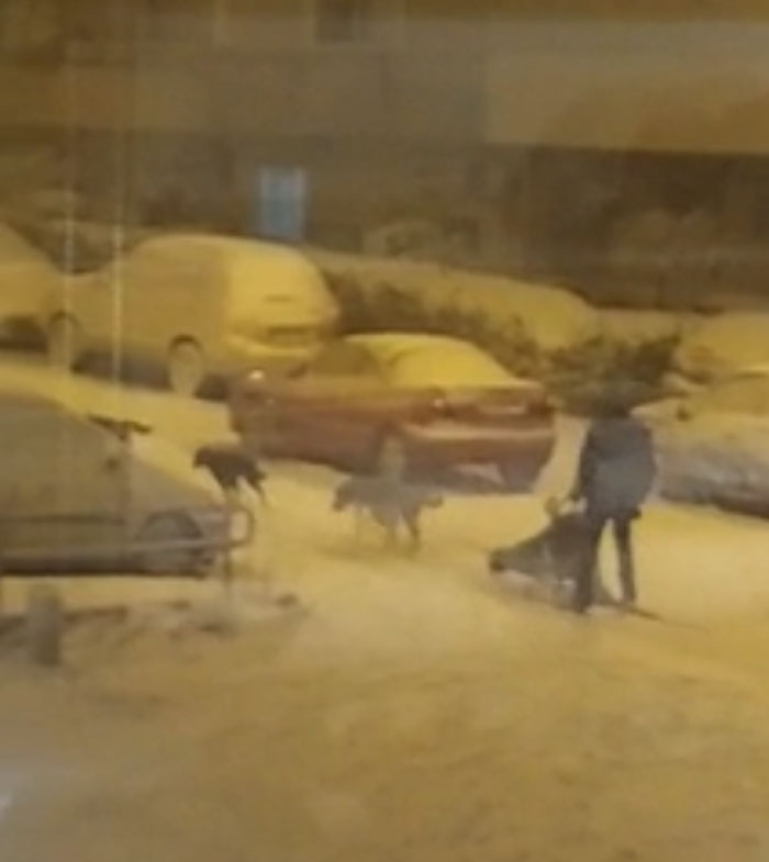 It Has Been Snowing Like Crazy In Spain And Then Theres This Guy