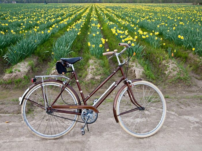 My 1969 Raleigh Sports Bicycle, Still Widely Available Used, Will Last Forever With Minimal Care. I Ride Mine Regularly And Have Owned It For Over Ten Years